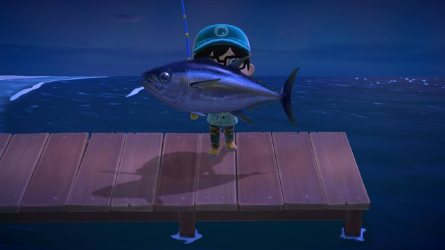 Der Thunfisch gehört zu den Fischen, die ihr fangen könnt, wenn ihr am Steg angelt.