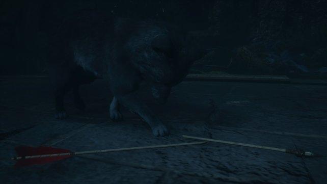Unten bei der Quelle des Schicksals versteckt sich ein kleiner schwarzer Wolfswelpe. Havi will diesen tot sehen.
