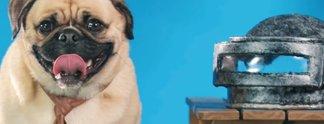 Panorama: Hunde schlüpfen in Cosplay-Kostüme von Halo und PUBG