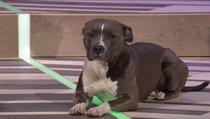Während der Ubisoft-PK stiehlt Hund Bam Bam allen die Show