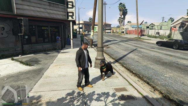 Franklin kümmert sich um seinen Hund Chop, geht mit ihm Gassi, spielt Ball oder hetzt ihn auf Passanten.