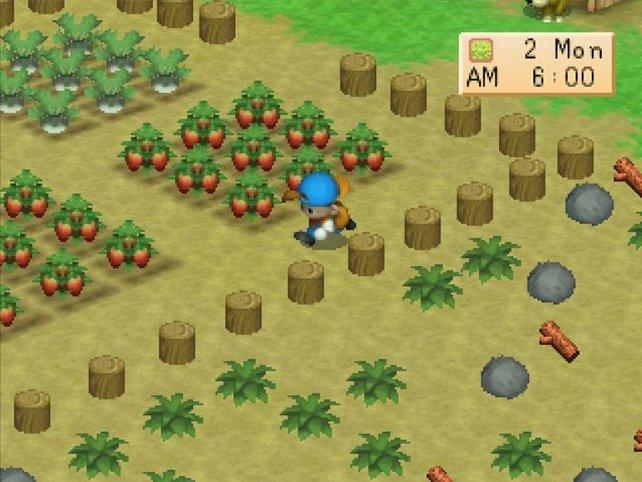 Gras zu mähen bringt euch kostenloses Tierfutter ein. Harvest Moon 64 ist der offiziell zweite Teil, erscheint aber nie in Europa. Dabei gilt er als einer der besten Vertreter der Reihe.