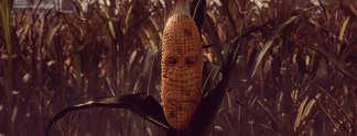 Maize: In diesem Indie-Spiel dreht sich alles um das goldene Korn