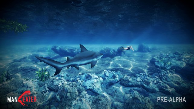 """Ihr seht einen Taucher, der Hai sieht: """"Omnomnom!"""""""