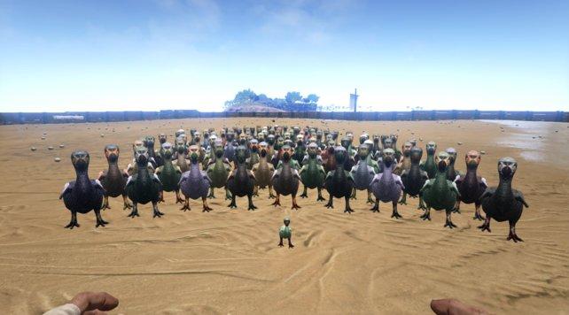 Von wegen ausgestorben: Unter Tonnes Obhut blüht der Dodo wieder auf.