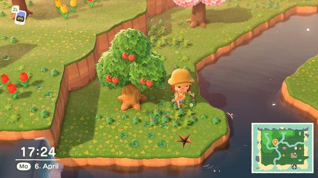 Jede Insel in Animal Crossing: New Horizons besitzt eine heimische Obstart.