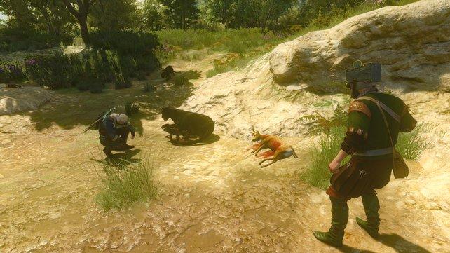 Nicht jede Bestie muss sich vor Geralts Schwert in Acht nehmen.