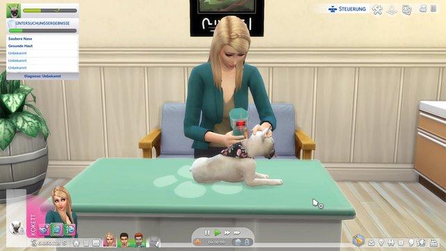 Als Tierarzt könnt ihr den kleinen Vierbeinern helfen, wieder auf die Beine zu kommen.