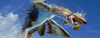 Tests: Monster Hunter 4 Ultimate: Die neue Jagdsaison ist eröffnet