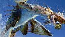 <span></span> Monster Hunter 4 Ultimate: Die neue Jagdsaison ist eröffnet