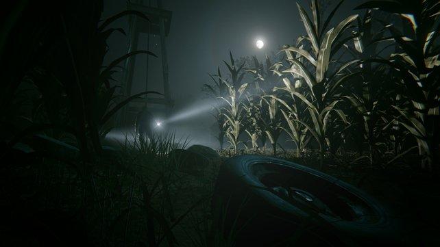 Nachts in einem Maisfeld. Dieses Szenario funktioniert immer wieder.