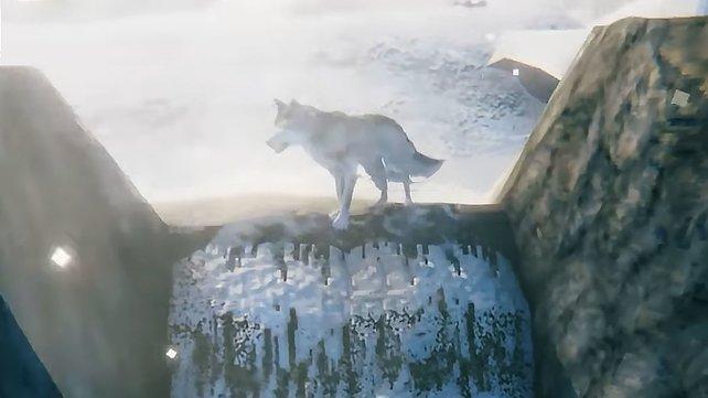 Wölfe können in Valheim zum besten Freund der Wikinger werden, wenn ihr sie zähmt.
