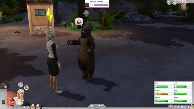 Bären treiben ihr Unwesen.