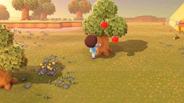 Ihr könnt die Früchte natürlich auch schon während der Suche nach den Ästen aufsammeln und beide Aufgaben kombinieren.