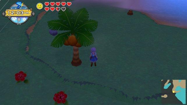 Von dieser Palme könnt ihr nicht nur die Kokosnüsse ernten, sondern sie auch gleich zu Kleinholz verarbeiten, um Palmenholz zu gewinnen.