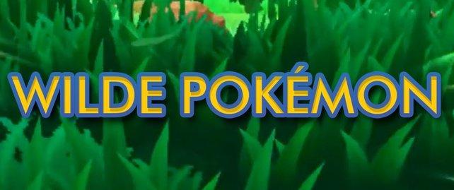 Pokémon Sonne und Mond: Route 5 und Plätscherhügel komplett
