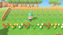 Animal Crossing: New Horizons: Blumen züchten und kreuzen