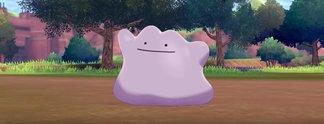 Tipps: Pokémon - Schwert & Schild: Alles zur Zucht: Eier ausbrüten, Ditto und Shinys