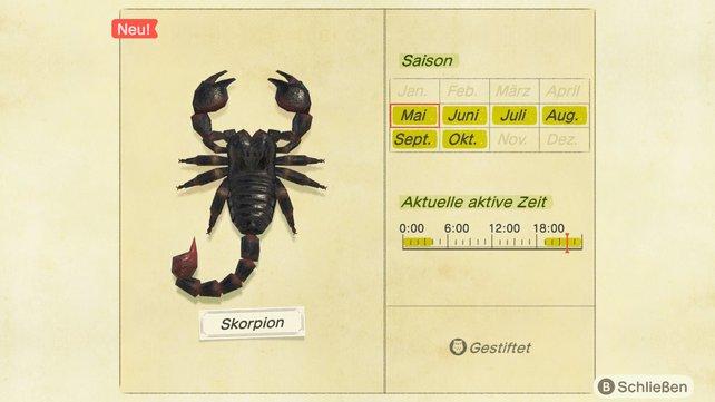 Skorpione gehören zu den gefürchtetesten Wesen auf eurer Insel.
