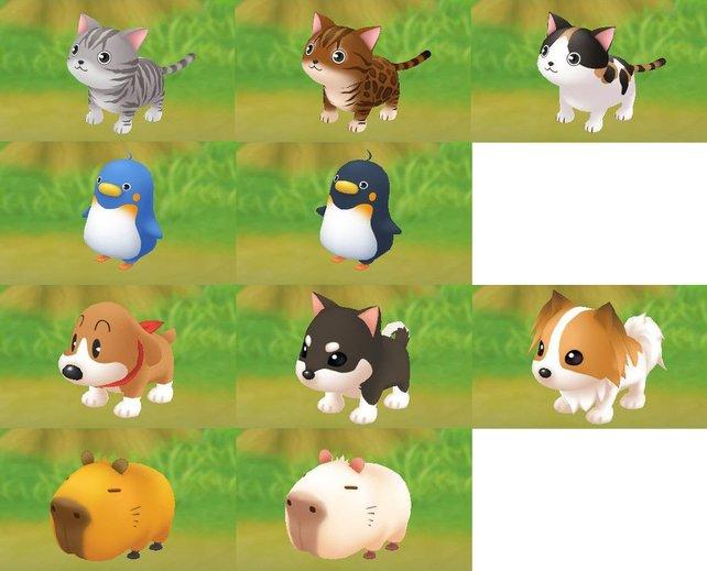 Alle Haustiere auf einen Blick.