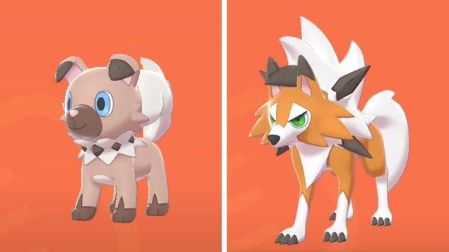 Das Tempomacher-Wuffels und das Zwielicht-Wolwerock gehören zu den seltensten Pokémon auf der Rüstungsinsel.