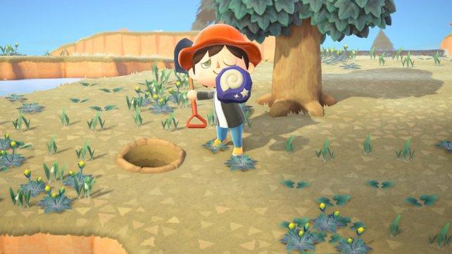 So sehen die ausgegrabenen Fossilien in Animal Crossing: New Horizons aus.