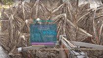 Ark - Survival Evolved: Trockenfutter: Rezepte und Verwendung des Kibble