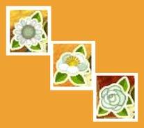 Alle Blumen und ihre Bedeutung