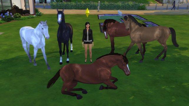 Dank dem Custom Content, könnt ihr diese zauberhaften Pferde auf eurem Grundstück platzieren.