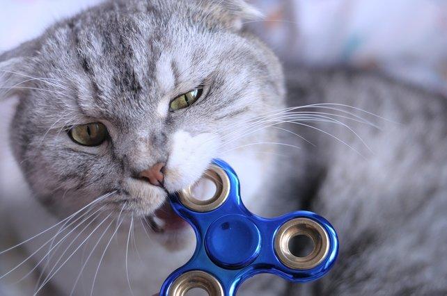Katzen und Fidget Spinner: Laut Ajit Pai geht es euch im Internet in erster Linie darum.