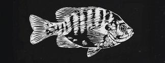 Bilderstrecken: Alle Fische mit Fundorten