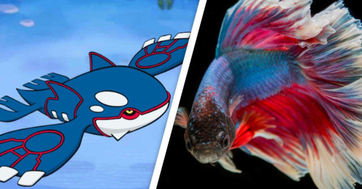 Fische spielen Pokémon durch, brauchen dafür Monate