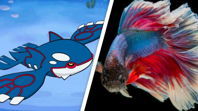 Eine handvoll Kampffische tut sich zusammen um Pokémon Saphir durchzuspielen.
