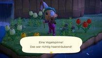 Animal Crossing: New Horizons: Vogelspinnen fangen und teuer verkaufen