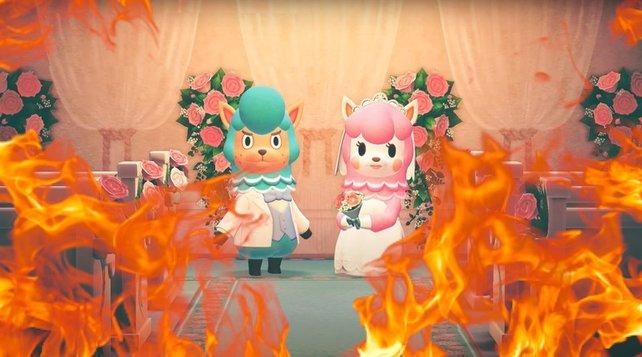"""""""Animal Crossing: New Horizons""""-Spieler rösten die süßen Alpaccas wie Marshmallows."""