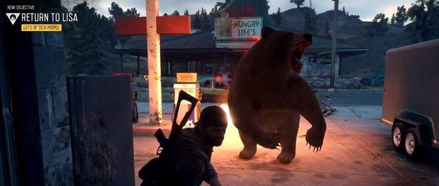 Vorsicht: Wenn euch der Bär so sehr nahe kommt, ist es fast schon zu spät.