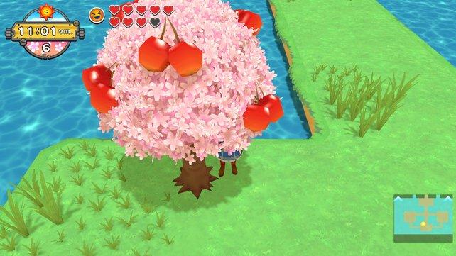 Dieser wunderschöne Kirschblütenbaum blüht nur an einer Stelle in Calisson.
