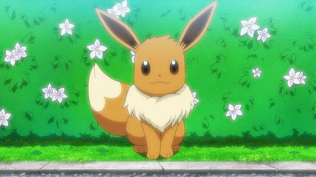 News | Junger Pokémon-Fan verkauft Sammelkarten, um sein Hundebaby zu retten