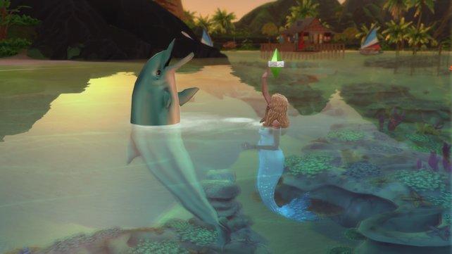 Spielt mit den Delfinen im Wasser und genießt das Leben im Meer.