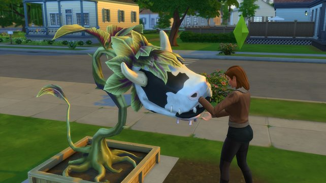 Diese süße Kuhpflanze könnt ihr in eurem Garten züchten.