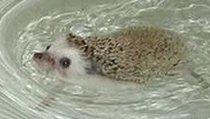 <span></span> Wahr oder falsch? #190: Kann Sonic aufgrund eines Irrtums nicht schwimmen?