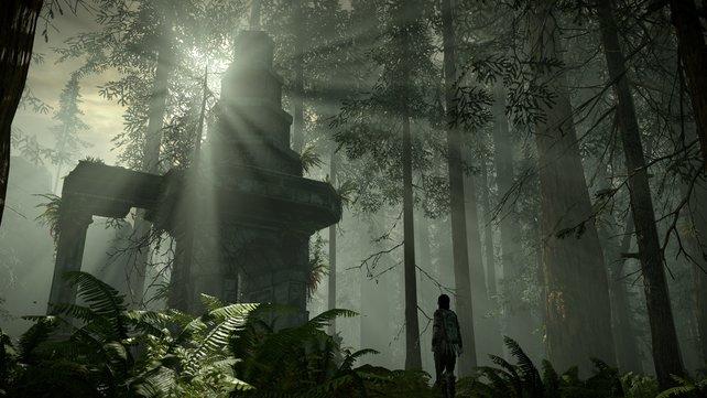 """""""God Ray""""-Effekt im Wald: Die neue Grafik ist der Atmosphäre äußerst zuträglich."""