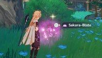 Genshin Impact: Sakura-Blüten finden und einsammeln
