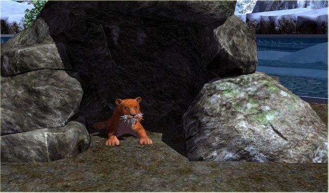 Ein kleiner Löwe erwärmt jedes Spielerherz.