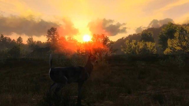 So malerisch kann ein Jagd-Simulator aussehen.