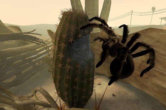 Wie Spiderman springt die Tarantel umher.