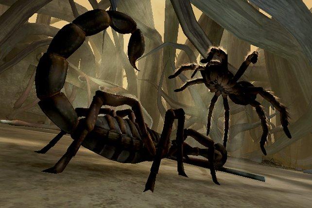 Die Hauptcharaktere sind die phobieauslösende Tarantel und der giftige Skorpion.
