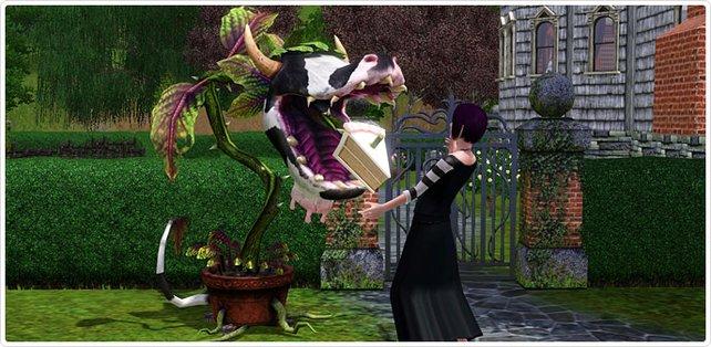 Kuhpflanzen mit Kuchenzungen sehen niedlich aus. Aber die Sims sollten sie trotzdem meiden.