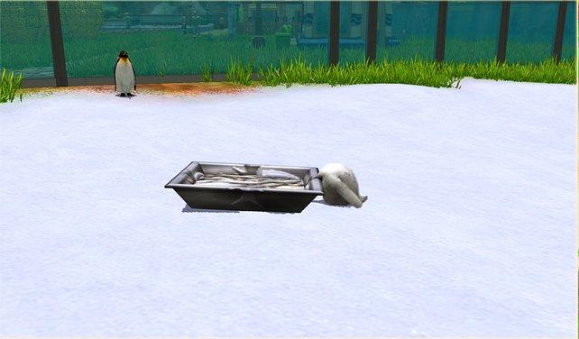 Merkwürdige Fehler: Wo ist der Kopf des Pinguin-Babys geblieben?