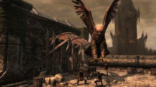 Dieser große Vogel hier ist nicht euer Feind.